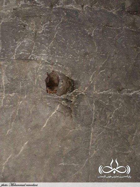 غار دیو سپید استان بزرگترین زیستگاه  سمندر آبی جهان